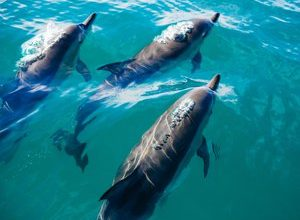Photo of Denmark: after another massacre of 1,400 dolphins, the Faroe Islands will look into the regulation of hunting