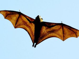 origin-of-covid-19:-viruses-close-to-sars-cov-2-discovered-in-bats