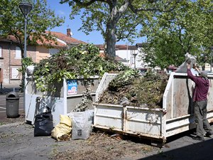a-petition-against-the-end-of-green-waste-collection