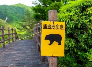 Photo of Japan: rock music to protect inhabitants from bears